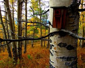 birdhouse_11